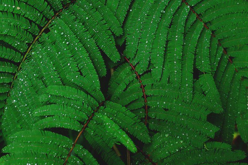 Investieren – Geldanlage in nachhaltige Forstwirtschaft